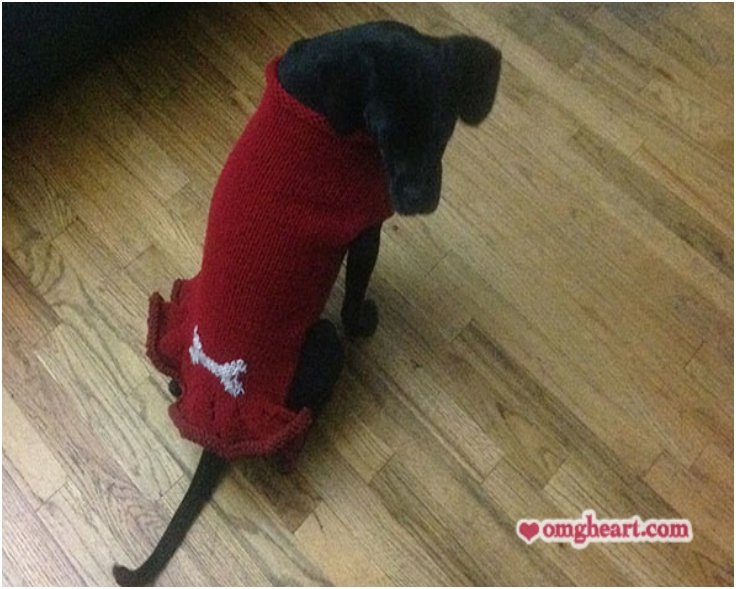 how to make a diy dog sweater