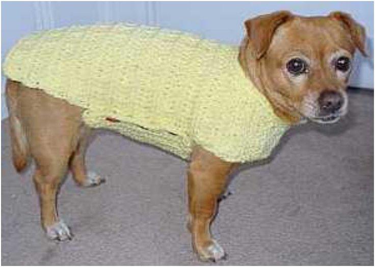 DIY dog crochet sweater pattern