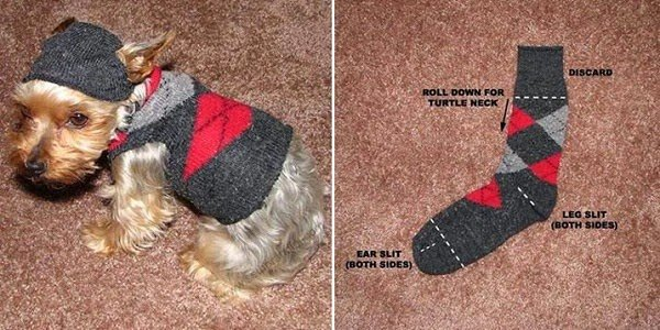 how to make a dog sweater out of a sock