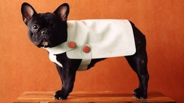 diy dog sweaters