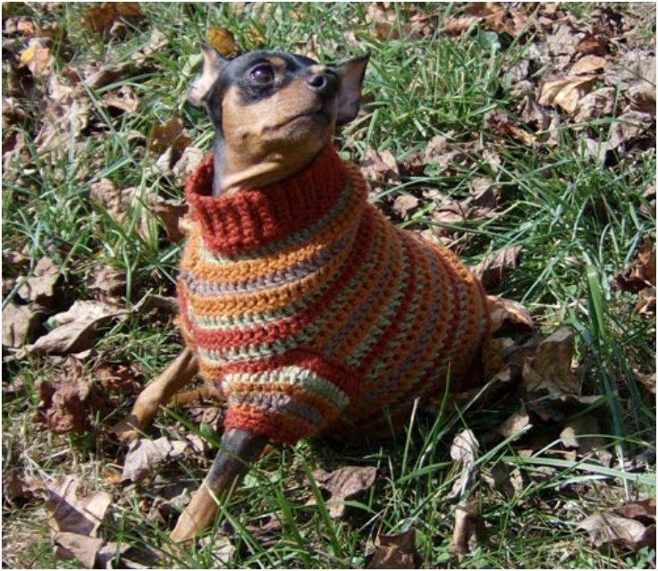 diy knit dog sweater