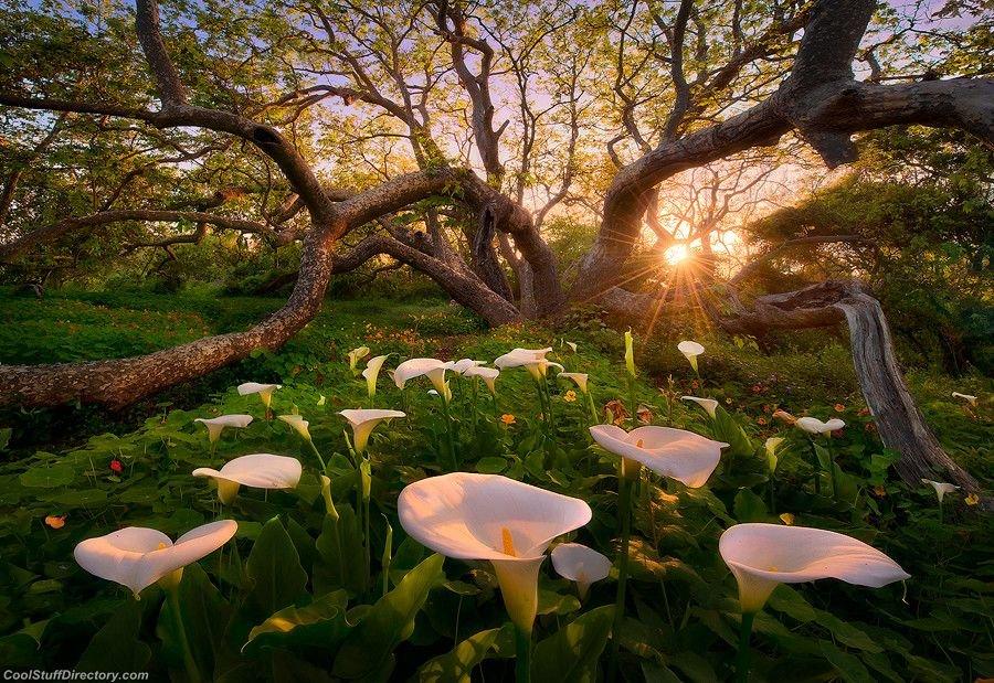 Heaven on Earth by Marc Adamus