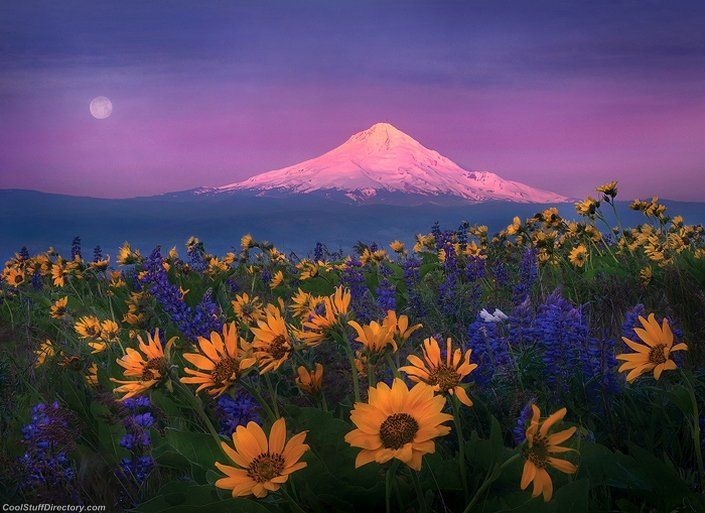 Magical Nature Landscapes (11)