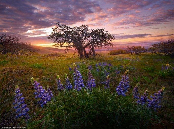 Magical Nature Landscapes (15)