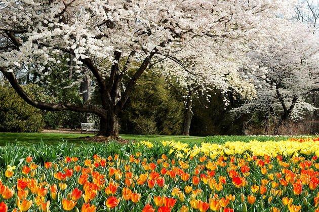 radishhai-tulips-longwood-garden