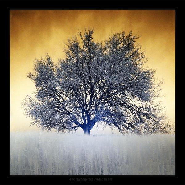 treephoto11