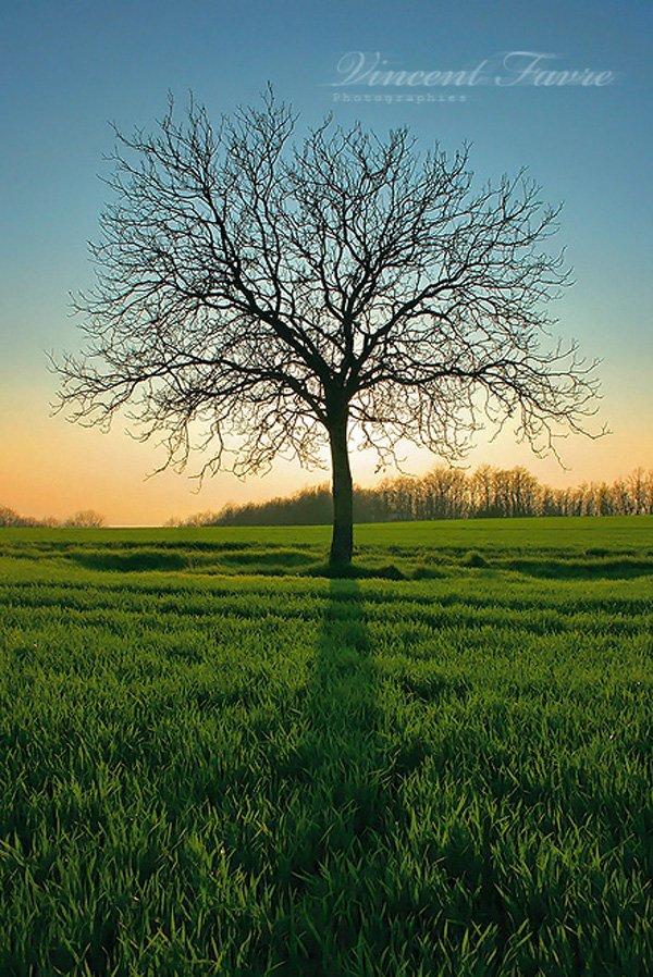 treephoto17