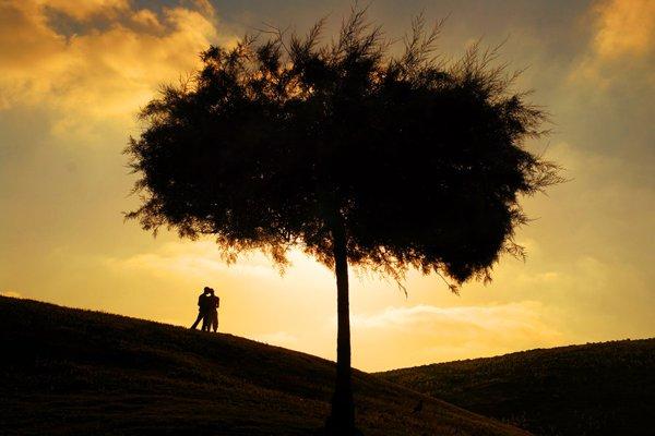 treephoto20