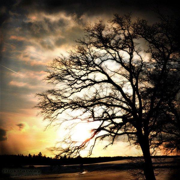 treephoto23