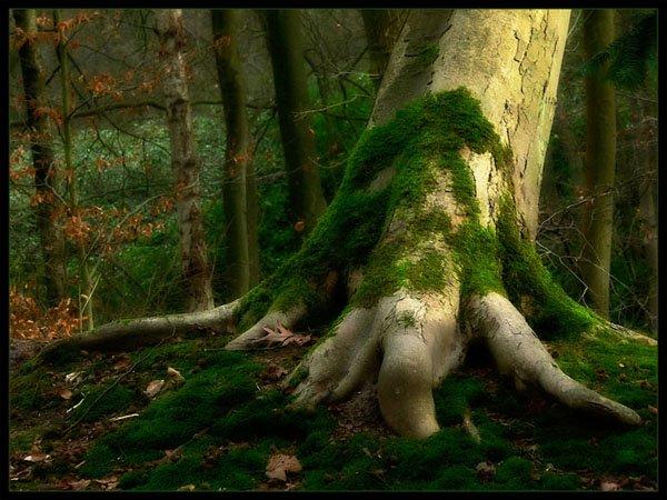 treephoto3