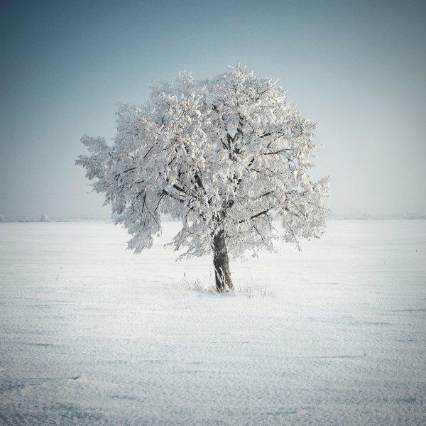 treephoto30