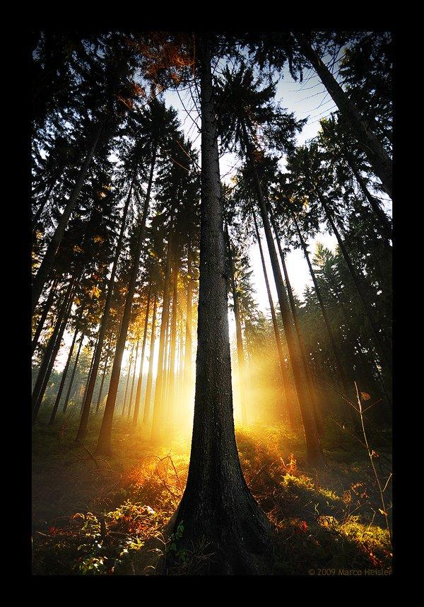 treephoto32