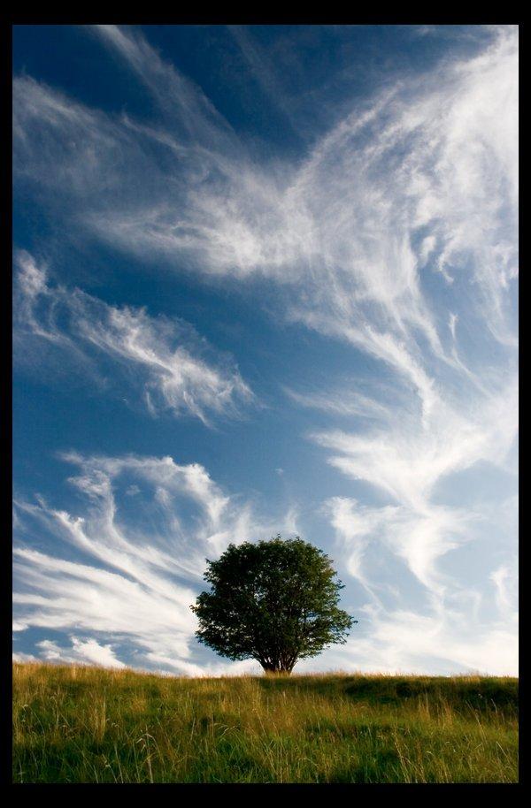 treephoto36