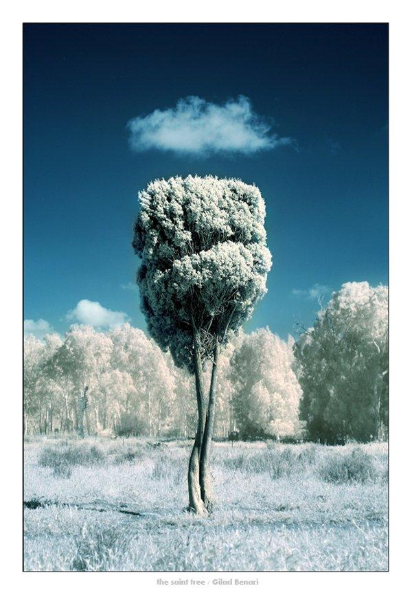 treephoto5