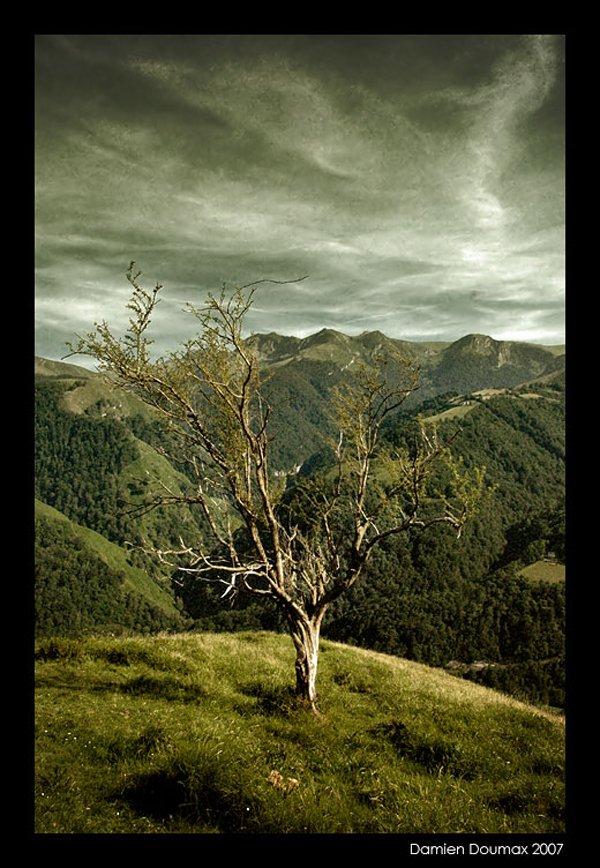 treephoto6