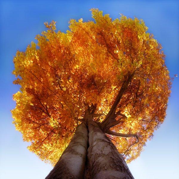 treephoto8