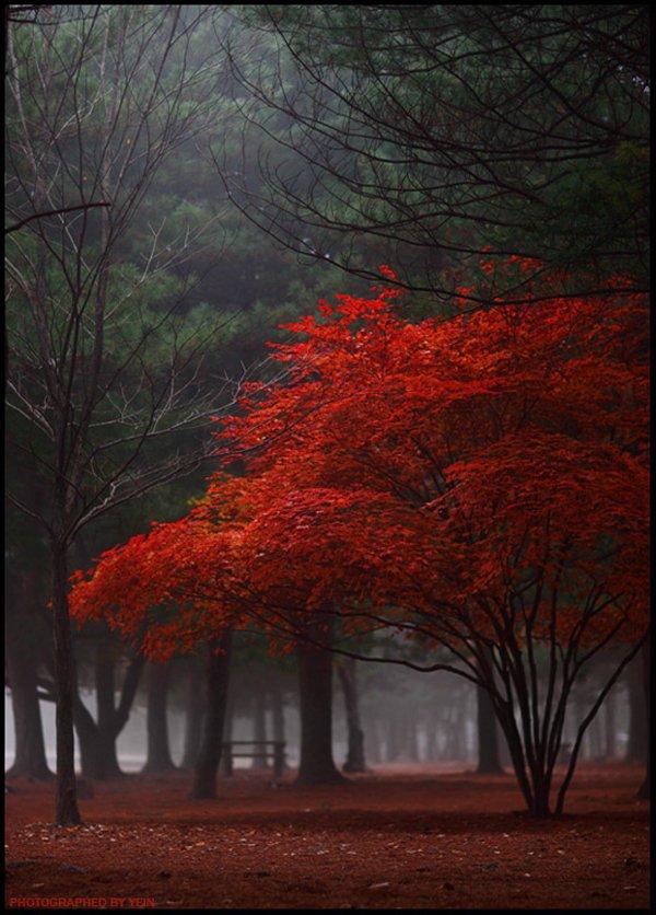 treephoto9