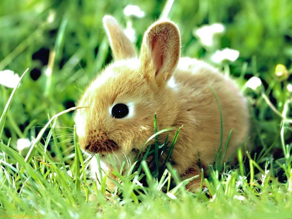 lovely animal photos