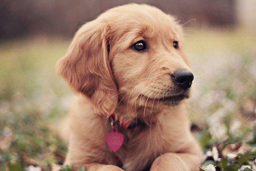 lovely dog photo