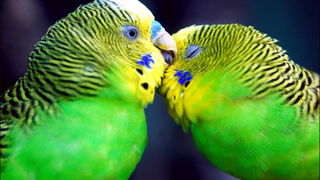 beautiful pictures of birds