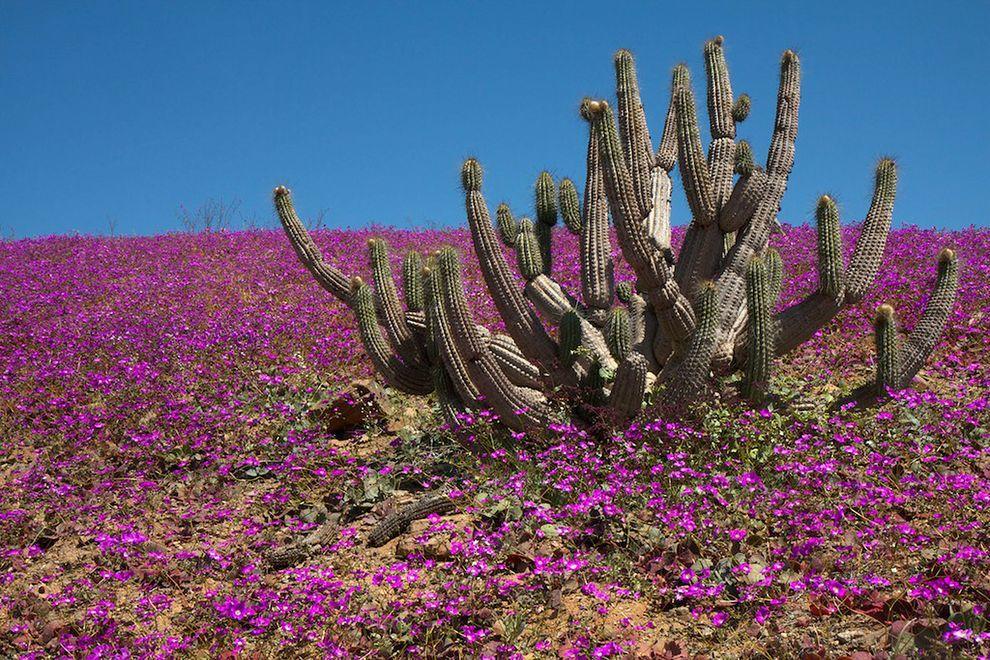 desert plants for front yard