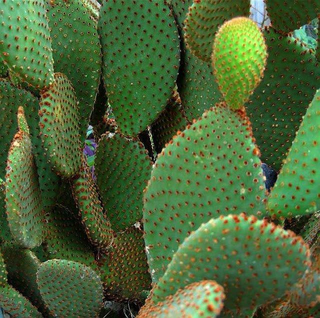 desert plants for home gardens