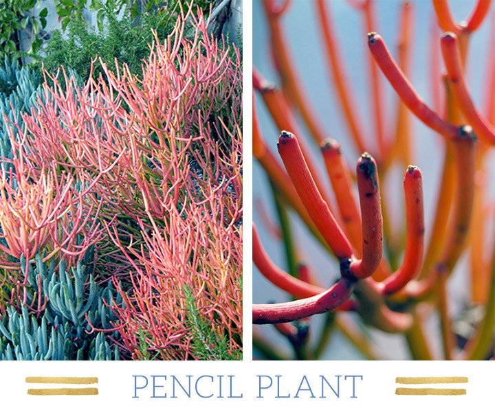 The Most Beautiful Plants That Lives Only In The Desert