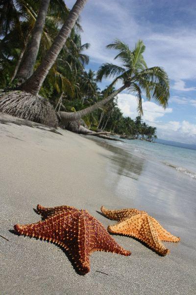 types of starfish