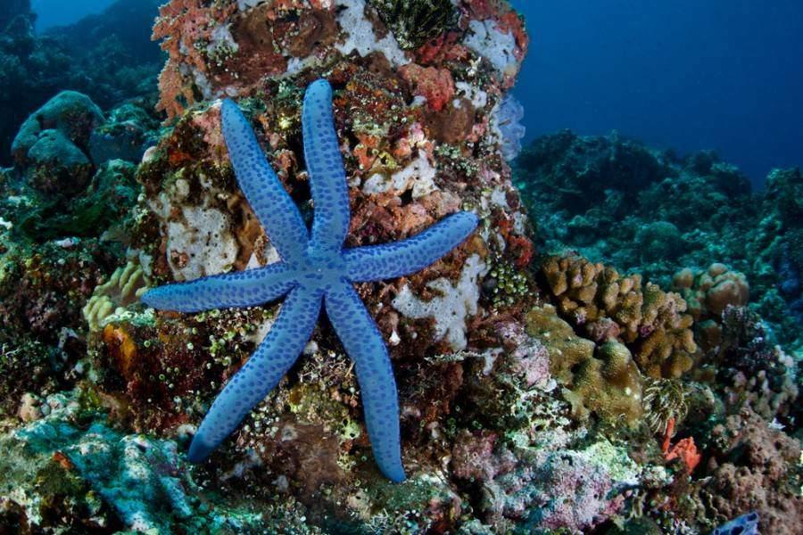 starfish names
