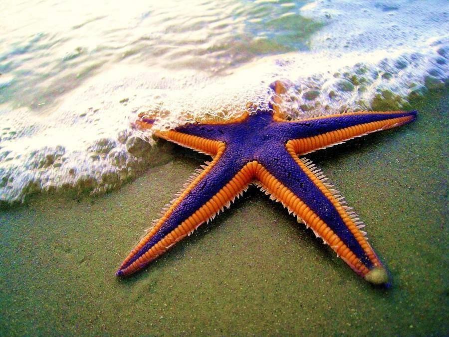 prettiest starfish