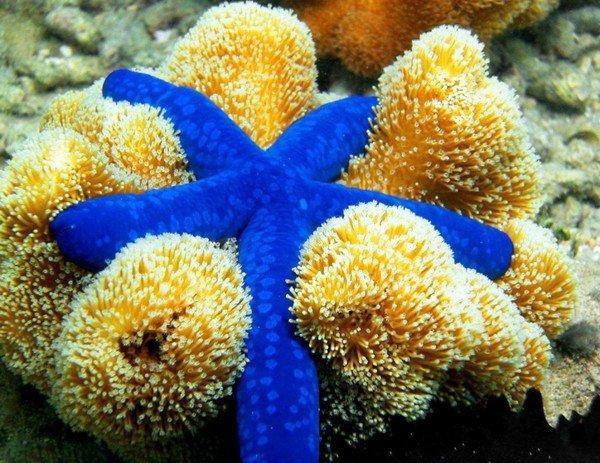 pretty starfish pictures