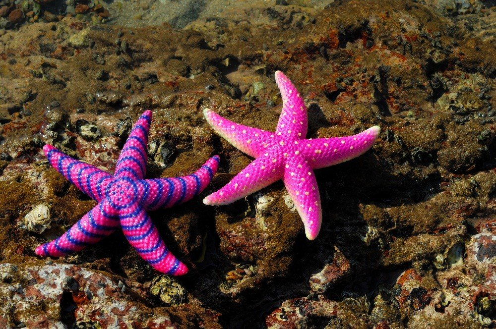 Interesting Facts About Beautiful Starfish World Inside