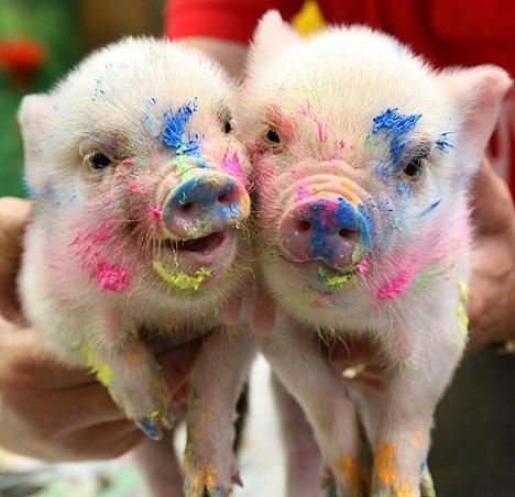 pigs that create art