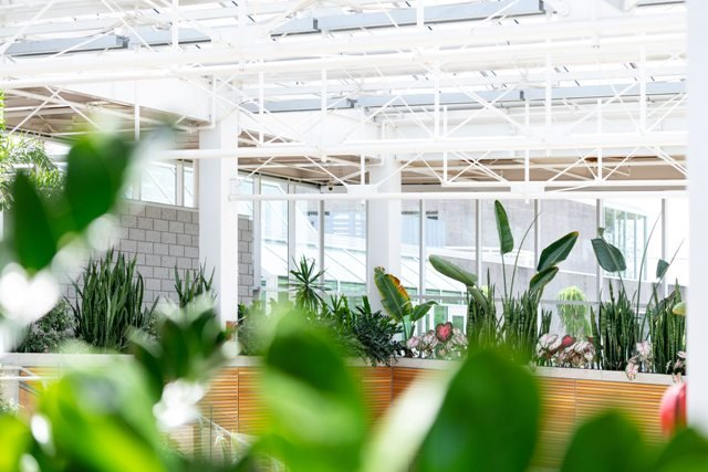 5 Tips For Better Gardening Pest Control in Greenhouses
