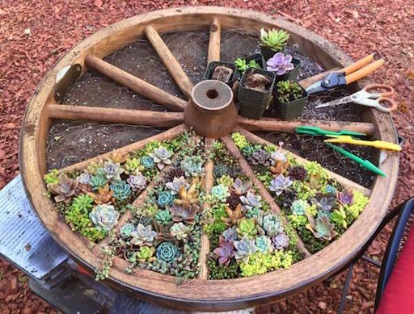 succulent gardens in pots