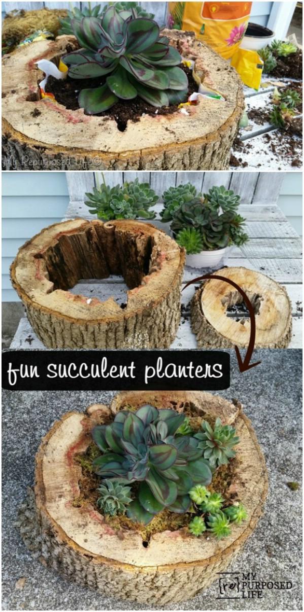outdoor succulent gardens