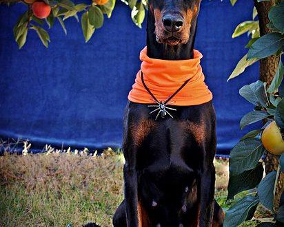 pumpkin seeds for dogs
