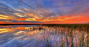Everglades In Florida