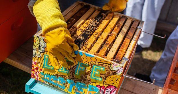 Beekeeping in Texas